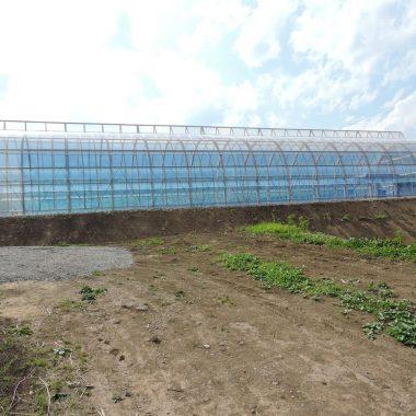 飯綱町で通年栽培の実証試験